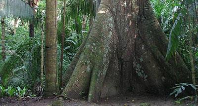 La Ceiba en el universo maya
